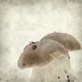 Textured old paper background with twin porcino mushrooms Royalty Free Stock Photo