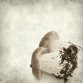 Textured old paper background with twin porcino mushrooms Royalty Free Stock Images