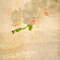 Textured old paper background with white and magenta orchid phalaenopsis Stock Images