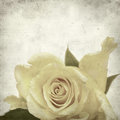 Textured old paper background with yellow rose Royalty Free Stock Image