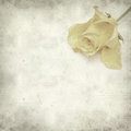 Textured old paper background with yellow rose Stock Photo