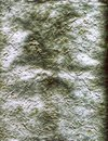 Textured Paper Green and White Colored Background Royalty Free Stock Photo