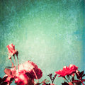Textured roses pink over turquoise blue background Stock Images