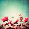Textured roses pink over turquoise blue background Royalty Free Stock Photography