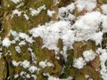 The textured surface of the bark of a tree with snow