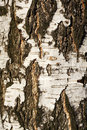 Textured tree bark Stock Photos