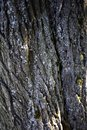 Textured tree bark for a spectacular background