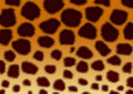 Textures - a fluffy skin of a leopard Stock Photography