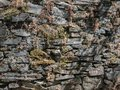Textures and colors, rock wall Royalty Free Stock Photo