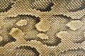 Textures - Snakeskin #1 Royalty Free Stock Photo
