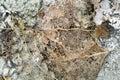 Textuur met rotte bladeren met vezels op een concrete oppervlakte Royalty-vrije Stock Foto's