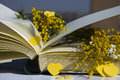 Th march yellow mimosa on book for international woman s day Stock Images