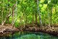 Tha pom the mangrove forest in krabi thailand Stock Image