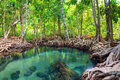 Tha pom the mangrove forest in krabi thailand south of Royalty Free Stock Photography