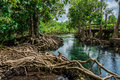 Tha pom swamp forest Krabi thailand