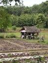 Thai cabin poor wood in farm Stock Photos