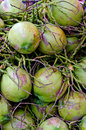 Thai coconuts in Thailand. Royalty Free Stock Photo