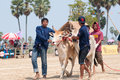 Thai cow in cow cart racing festival Stock Photos