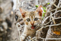Thai cute naughty cat Royalty Free Stock Photo