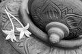 Thai design Clay Pottery and Millingtonia hortensis , Indian cork tree Royalty Free Stock Photo
