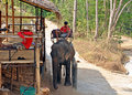 Thai elephant camp Royalty Free Stock Photos