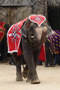 Thai Elephant wear red cloth Stock Photos