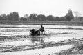 Thai Farmer using tiller tractor in rice field