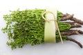 Thai food siamese neem tree nim margosa quinine azadirachta indica a juss var siamensis valeton Stock Image