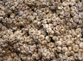 Thai garlic separated for background Royalty Free Stock Photo