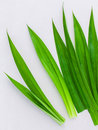 Thai herbal ingredient for thai dessert and spas aromatherapy pa Royalty Free Stock Photo