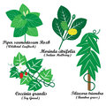 Thai herbal remedies vector on white background Stock Photo