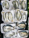 Thai meckerel fish at fresh market wrapped Royalty Free Stock Photography