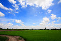 Thai rice field in sunny day with blue sky Stock Images