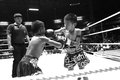 Thai young boxers fighting on boxing ring
