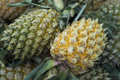 THAILAND CHIANG RAI MARKET FRUITS PINEAPLE Royalty Free Stock Photo