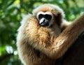 Thajsko opice
