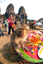 Thailand Monkey Party ( Thailand Monkey Buffet ). Royalty Free Stock Photo
