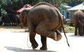 Thailand`s asian elephants perform