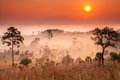 Thailand savannah morning in tung slanglung national park northern of Stock Image
