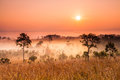 Thailand savannah morning in tung slanglung national park northern of Royalty Free Stock Image