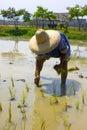 Thaise Landbouwer die rijst plant Royalty-vrije Stock Foto