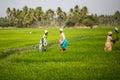 Thangaur india february indisk arbetare på februari Royaltyfri Bild