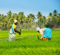 THANJAVOUR, INDIA - FEBRUARY 13: An unidentified the Indian rural women works at rice field. India, Tamil Nadu, near T
