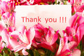 `Thank you` Stock Photography