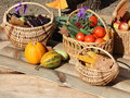 Thanksgiving day photo heavy crop stock images of vegetables pumpkins baskets of tomatoes cucumbers eggplants apples Stock Photos