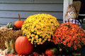 Thanksgiving decoration arrangement from flowers bale of hay pumpkin squashes apples maize scarecrow and dry leaves in front of Royalty Free Stock Photo