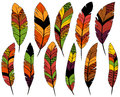 Thanksgiving or Fall Colored Feathers Royalty Free Stock Photo