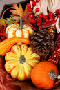 Thanksgiving Fall Harvest Stock Photo