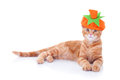 Thanksgiving Halloween Pumpkin Cat Royalty Free Stock Photo