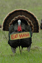 Thanksgiving Humor: 'Eat Ham' Turkey Stock Photography